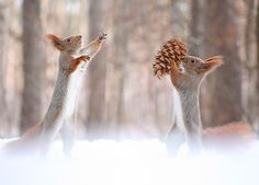 Come on, give me pine cones! by Vadim Trunov on 500px