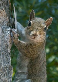 cool squirrel.