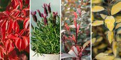 10 ανθεκτικά φυτά για μπαλκόνι Garden, Flowers, Plants, Projects, Gifts, Log Projects, Presents, Garten, Florals