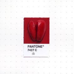 Pantone 7427 color match. Magnolia seeds. I find it fascinating the fact that such bright white flowers come from blood red seeds.