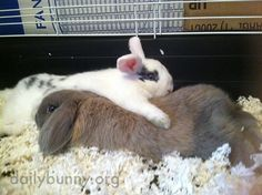 Bunny relaxes with an arm around his friend - January 23, 2015