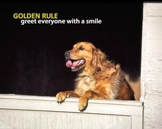 This is a Golden Rule for sure! #PetWisdom