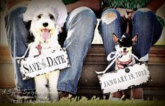 SAVE the DATE Sign Set for the DOGS , Vintage Photography , Photo Props , Vintage Wedding Signs on Etsy, $44.00
