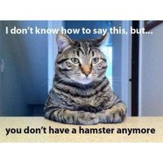 Best of Cat Shaming. cats admit to horrible things. Years ago our cat DID eat my daughters hamster! Cat Shaming, I Love Cats, Crazy Cats, Cute Cats, Silly Cats, Funny Kittens, Funny Cute, The Funny, Crazy Funny
