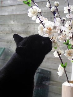 Image result for pictures of black cats and flowers