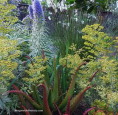 Blue Flowers, Aloe, Tel Aviv, Landscape, Banks, Terrace, Red, Gardening, Winter