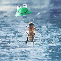 Happy Again, I'm Happy, Queen Bees, Cute Animals, Honey, Rain, Instagram, Interior, Photography