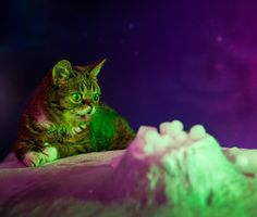 Here's the inside scoop on Vice Media's 'Lil Bub and Friendz' documentary, about the Internet's most famous cats, being screened at the Tribeca Film Festival.