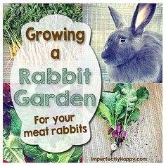 Grow Food for your Meat Rabbits Homesteading  - The Homestead Survival .Com