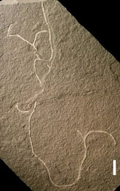 Ancient seaweed fossils some of the oldest of multicellular life #Geology #GeologyPage