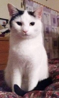 LOST CAT: 22/08/2017 - Kirton in Lindsey, North Lincolnshire, England, United Kingdom. Ref#: L35759 - #CritterAlert #LostPet #LostCat #MissingCat