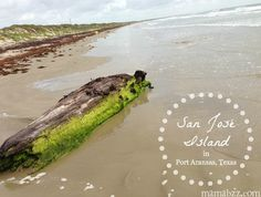 San José Island in Port Aransas, Texas. Sand dollars, solitude, and natural beauty.