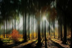 ~~~~ my dreamy fairy tale forest  ~~~~