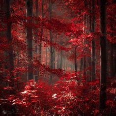 Crimson Forest, Hungary.  Photo by Ildiko Neer.