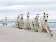 wild horses in North Carolina on the beach...would love to see them