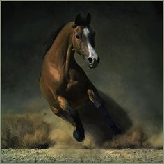 Wherever man has left his footprint in the long ascent from barbarism to civilization we will find the hoofprint of the horse beside it.  ~John Moore