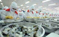 Thái Lan vẫn là nhà xuất khẩu tôm lớn nhất thế giới ở thị trường Hoa Kỳ   Vietnam Aquaculture Network