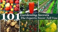101 Expert Gardening Secrets
