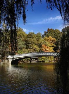 Central Park, New York City Copyright: Jean Francois Therreault
