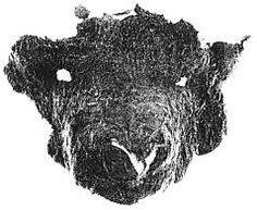 But from this later period, there are some amusing finds of felt, from the harbour-area of Hedeby (or Haithabu, as the German archaeologists call it). They are masks made like animal heads, and sewn onto woollen capes, so that the wearer was hidden as far down as his chest (Figures 11 and 12).