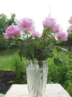 Rózsa vázában..
