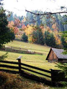 .Fall & Thanksgiving #provestra