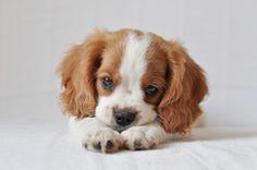 Darling Puppy