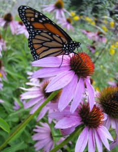 Pollinators are probably the first beneficial insect that we think of. Without…