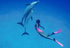 Surprising Dolphin Sex Facts