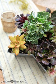 Set the scene with succulents  - how to make this succulent star planter for table decor or to hang on a garden fence.