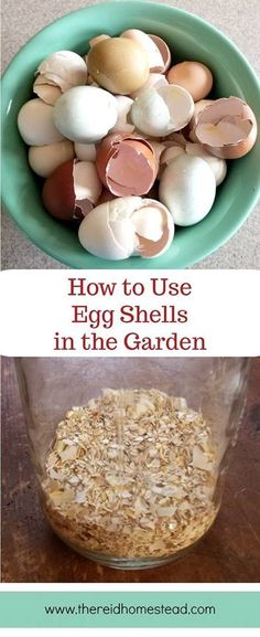 How to Use Egg Shells in the Garden-Learn the different ways you can use your egg shells to benefit your garden plants! Repurpose your eggshells into garden fertilizer! diy garden tips How to Use Eggshells in the Garden (to benefit your plants Diy Garden, Herb Garden, Garden Projects, Garden Plants, Garden Ideas, Backyard Plants, Garden Soil, Garden Care, Edible Garden