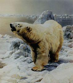 On the Ice Polar Bear by Carl Brenders Bear Paintings, Wildlife Paintings, Wildlife Art, American Animals, Bear Pictures, Bear Art, Animal Drawings, Animal Photography, Animals Beautiful