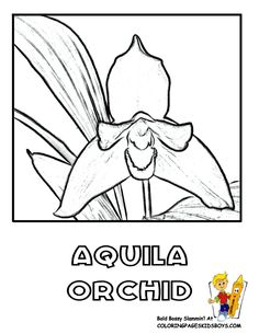 Free Flower Coloring Pages of Orchid and Iris pictures. Cool flower coloring sheets in neon or fluorescent? Tropical Flowers, Colorful Flowers, Indian Paintbrush Flowers, Flower Coloring Sheets, Plant And Animal Cells, Rare Flowers, Free Coloring Pages, Orchids