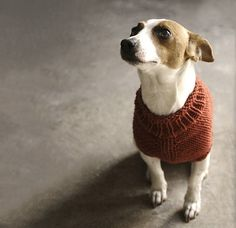 Knit The Juno Jumper, the most adorable dog sweater knitting pattern by Alice Neal Knitted Dog Sweater Pattern, Knit Dog Sweater, Dog Pattern, Free Pattern, Knitting Patterns For Dogs, Love Knitting, Knitting Wool, Wool Yarn, Knitting Ideas