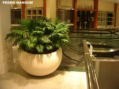 Chamaedorea elegans in Côco pot - Design by BOTANICA POP, Rio Sul Shopping Center, Rio BOTANICA POP 2011