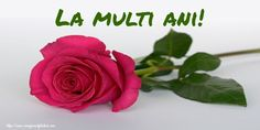 Cute Good Morning Text Messages For Him or Her [ Best Collection ] Morning Texts For Him, Cute Good Morning Texts, Good Morning Text Messages, Good Morning Wishes, Pink Rose Flower, Pink Roses, Pink Flowers, Bloom Blossom, Blossom Flower