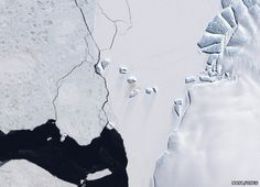 Landsat images: It is not possible to see individual birds from space but we can recognise their habitats. The brown staining (centre) on the white ice is a consequence of guano, or penguin poo, dropped by a colony of emperors.