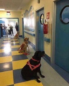 ...these dogs waiting to enter the hospital rooms of sick children for animal therapy.