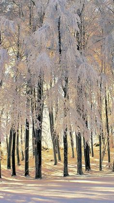 White trees http://www.pinterest.com/linenlavender/ll-collection-no-05/