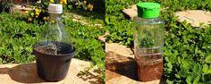 Mini estufa caseira com materiais recicláveis - Quando o tempo está chuvoso fica muito fácil propagar as plantas pelo método da estaquia mas se o tempo não ajuda nós podemos lançar mão de alguns métodos artificiais porém muito simples para ajudar neste processo.    Muda de malvavisco por estaquia! Acabou de sair da estufa caseira!   A estu... - http://www.ecoadubo.blog.br/ecoblog/2014/12/27/mini-estufa-caseira-com-materiais-reciclaveis/
