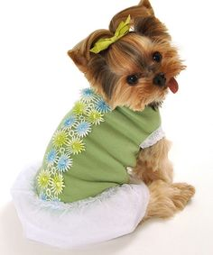 Another great find on #zulily! Green & White Spring Bouquet Dog Dress #zulilyfinds