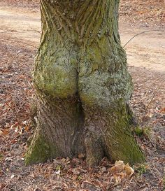 How would you like this tree in your front yard?
