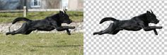Home - Clippingpathservice's website Clipping Path Service, Paths, Website, Dogs, Animals, Animales, Animaux, Pet Dogs, Doggies