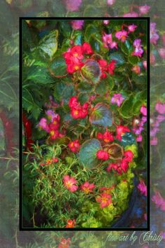 Fine art garden flowers from original digital paintings produced using Corel Paint, Photoshop, Wacom Brush Tablet, and hand painted textures by the artist. Prints are printed on various textured paper, canvas material, and framed. Visit us on Fine Art America at:   www.fineartamerica.com/profiles/christy-padgett  Flower Art Print, Flower Painting, Floral Wall Art, Original Painting, Flower, Flowers, Floral, Spring Flowers, Summer Flowers, Wall Art, Wall Decor, Home Decor, Gift For Her