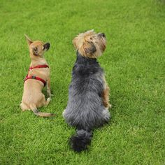 Dog Training Staffordshire - http://www.dog-ramblers.co.uk/