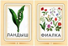 Технологии Буркова. Цветы. Botany, Container, Plants, Kids, Printables, Children, Plant, Baby Boys, Planting