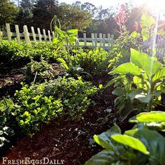 An herbal tea garden httpwwwcountrylivingcommobileoutdoor