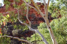 The rock canyon wall from Kings Creek walk The Rock, Wall, Plants, Photography, Painting, Photograph, Fotografie, Painting Art, Walls