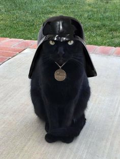 Darth Kitteh - May the Kibbles be with you.