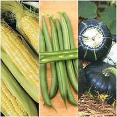 A harmonious trio of Corn, Beans and Squash. The ancient native technique of growing these three crops together is companion planting at its finest. This collection includes one package each of: Espresso Corn, Seychelles Pole Beans and Burgess Buttercup Squash, Green Fruit, Three Sisters, Bulb Flowers, Companion Planting, Grow Your Own, Popular Pins, Harvest, Seeds